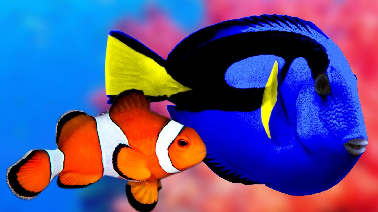 Relaxing music and beautiful fishes like regal blue tang for Blue clown fish