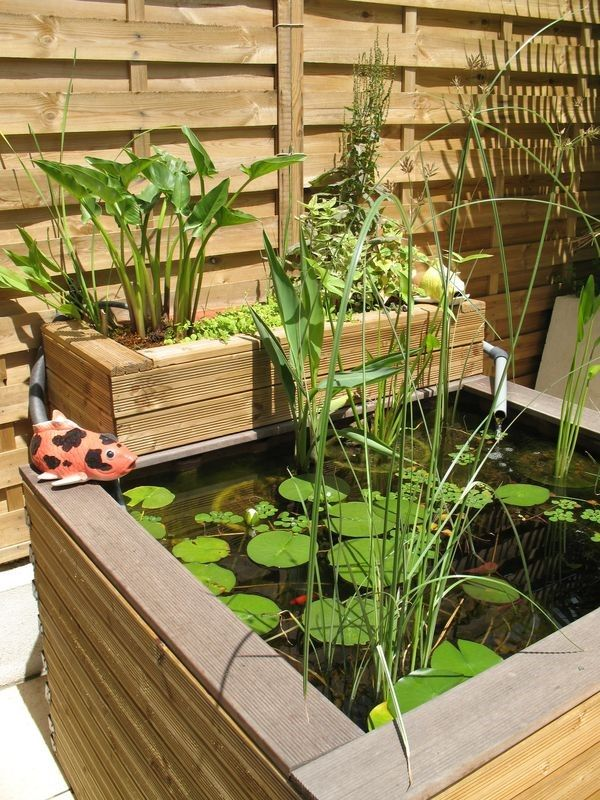 Aquaponics - Un petit bassin de jardin ou terrasse  des galets