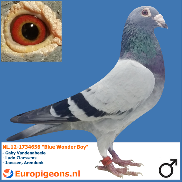 Light blue Pigeon Product Sporting pigeons Paint