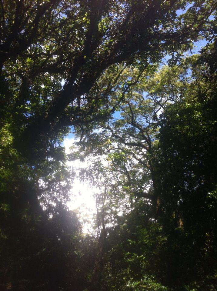 Bosque de la Hoja, Costa Rica