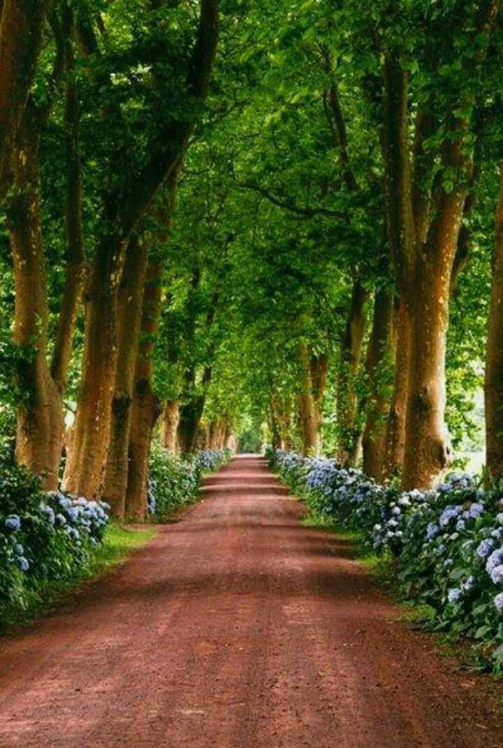 Driveway Entrance Landscaping, Beautiful