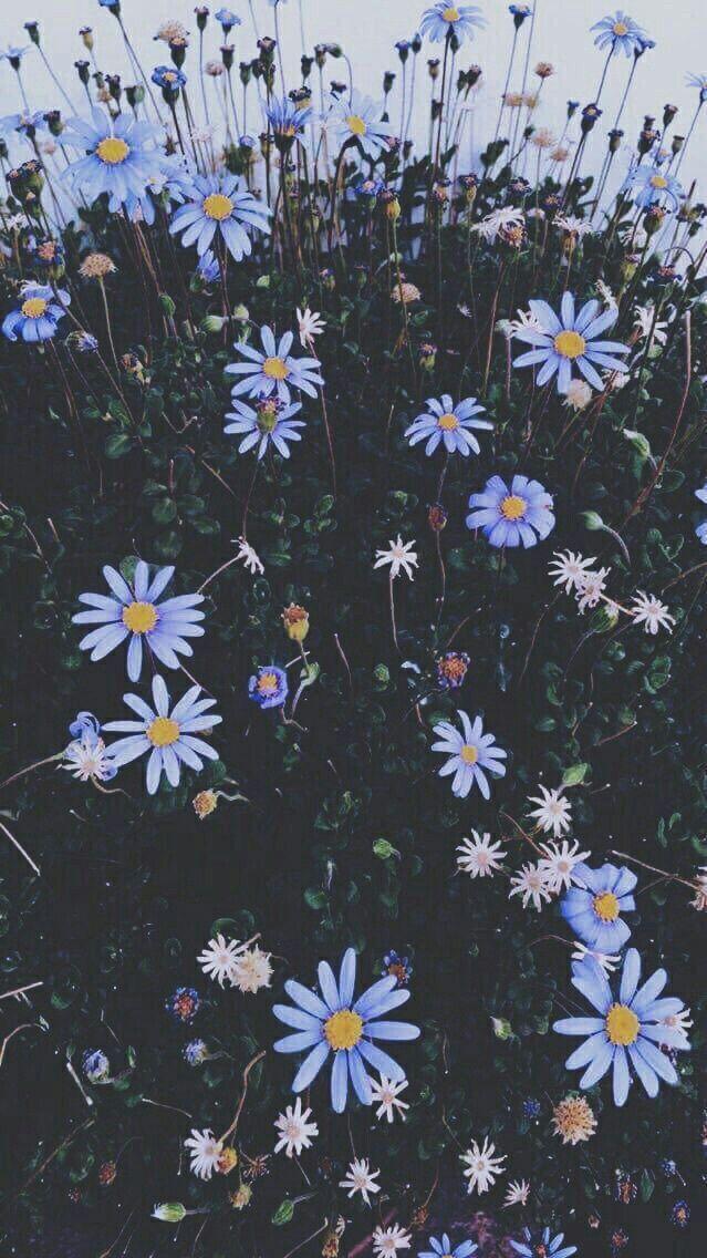aesthetic blue blueaesthetic Flower wallpaper