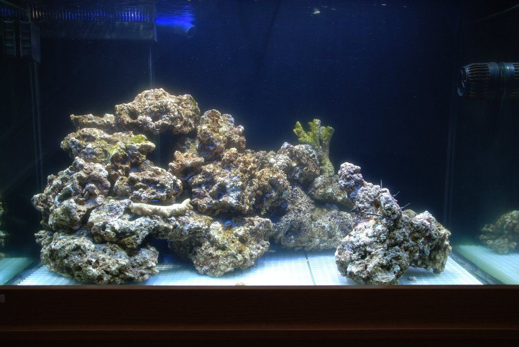 Reef tank aquascaping aquascaping first attempt for First fish tank