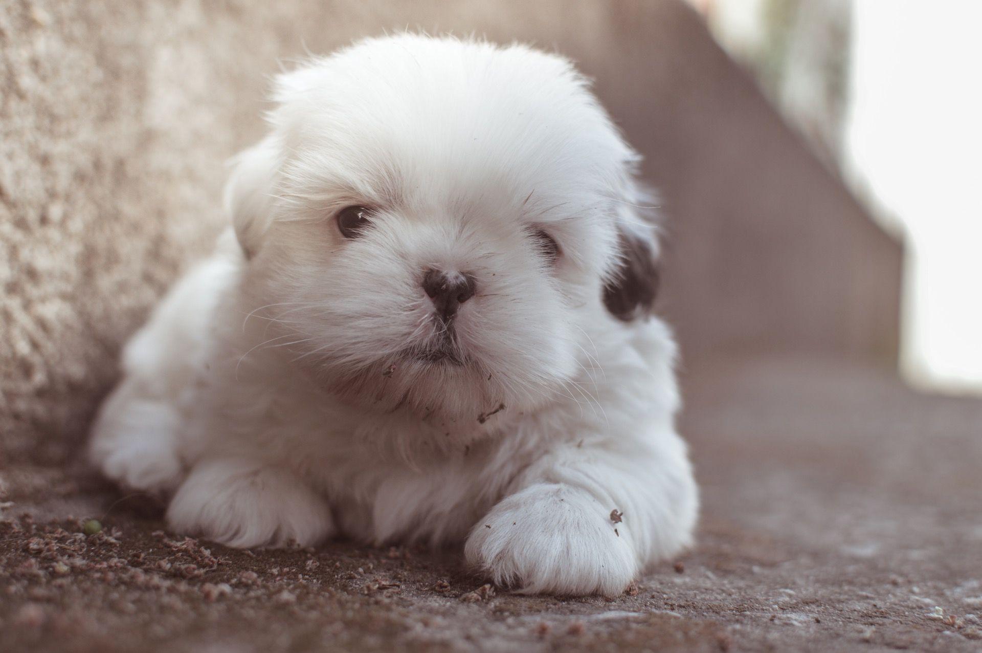 Pretty Puppy http://ift.tt/2n8Udsk