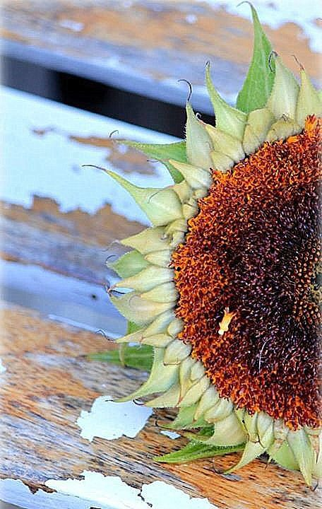sunflower gay personals Craigslist provides local classifieds and forums for jobs, housing, for sale, services, local community, and events.
