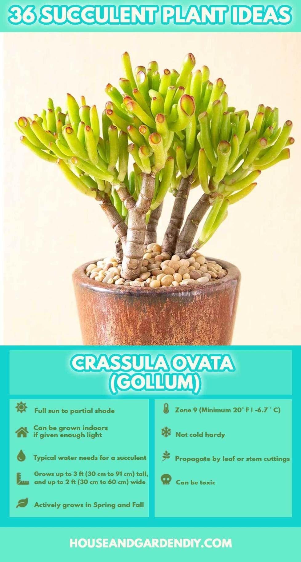 50 Beautiful Succulent Garden Ideas Varieties Succulent Garden