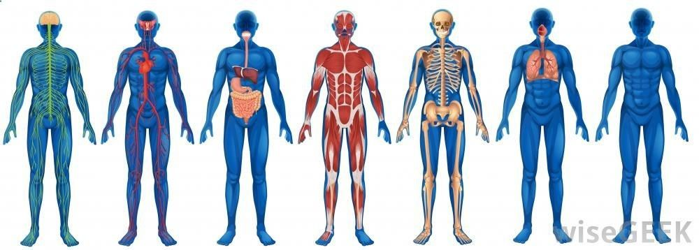 What is the Difference Between Anatomy and Physiology?http://www ...