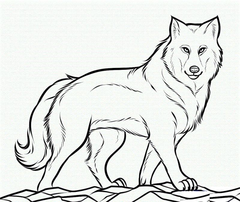 Downloadable Coloring Pages Wolf Skema Warna Warna