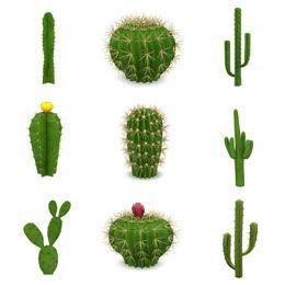 Different Type Of Cactus Plants Google Search Cactus Plants