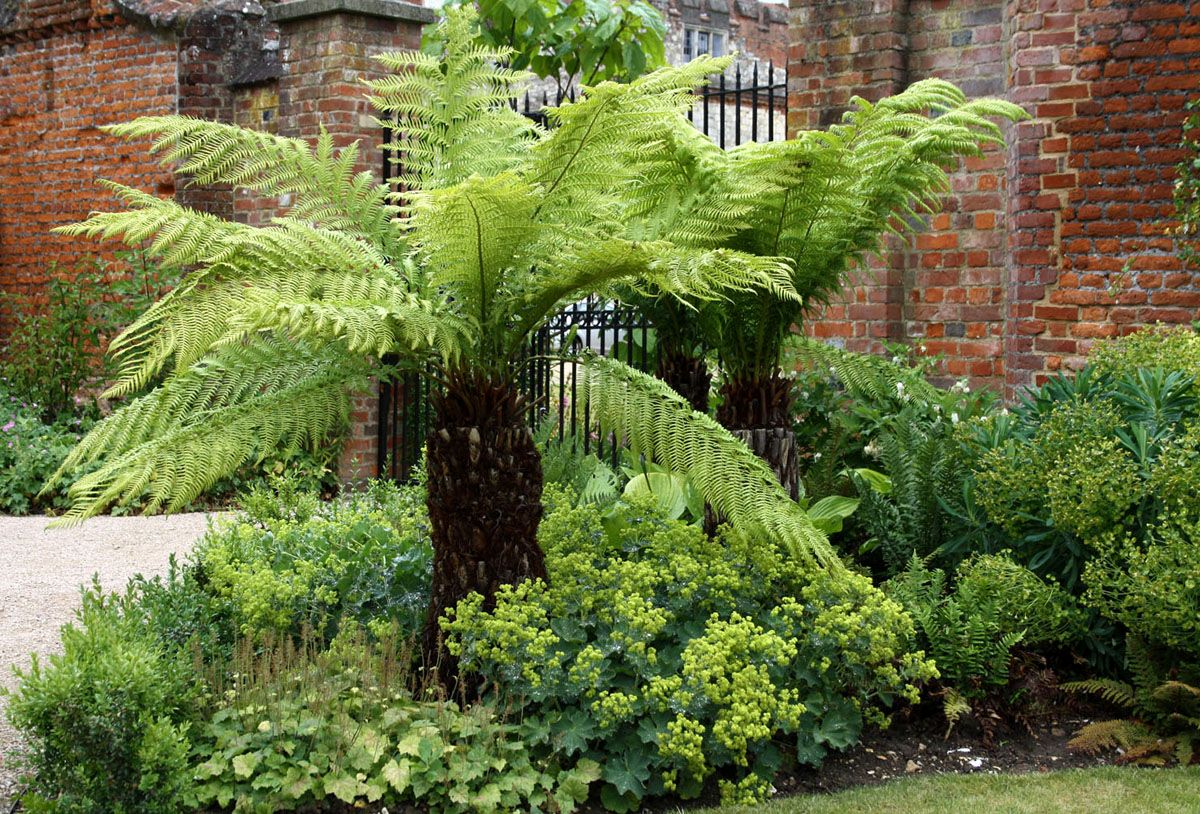Fern Garden Ideas Images for tree fern project cjs backyard pinterest fern garden ideas images for tree fern workwithnaturefo