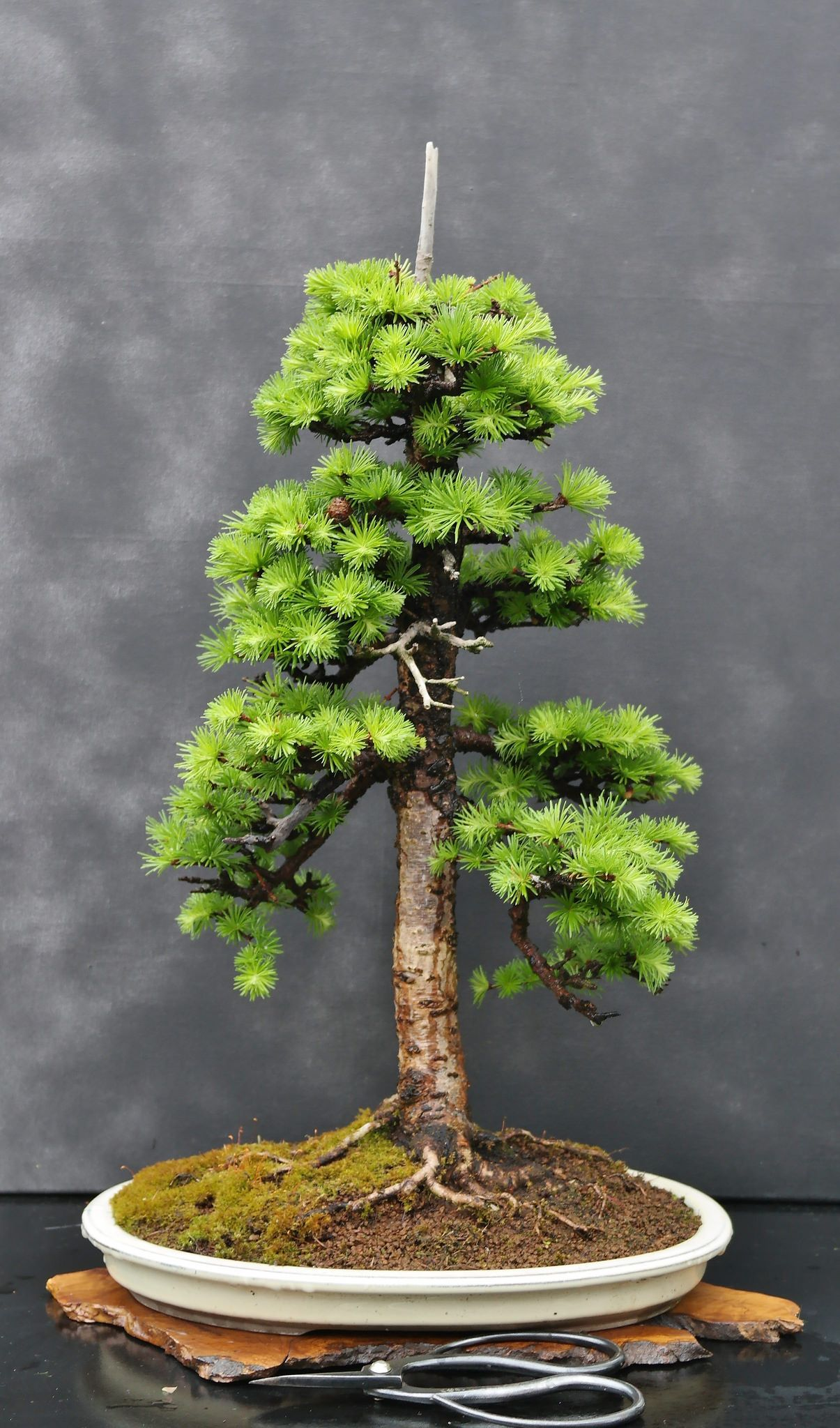 How To Start A Bonsai Tree The Diy Blog Jardins Plante Exterieur Et Beautiful
