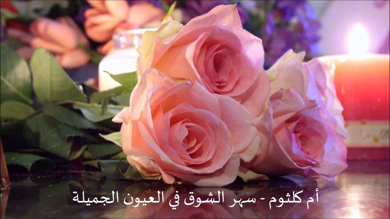 ام كلثوم هذه ليلتي سهر الشوق في العيون الجميلة Rose Flowers Plants