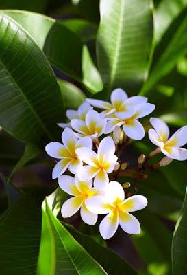 ورد ابيض فى حقل بين اغصان خضراء اللون Pretty Flowers Photography Beautiful Flowers Pictures Beautiful Flowers Photography