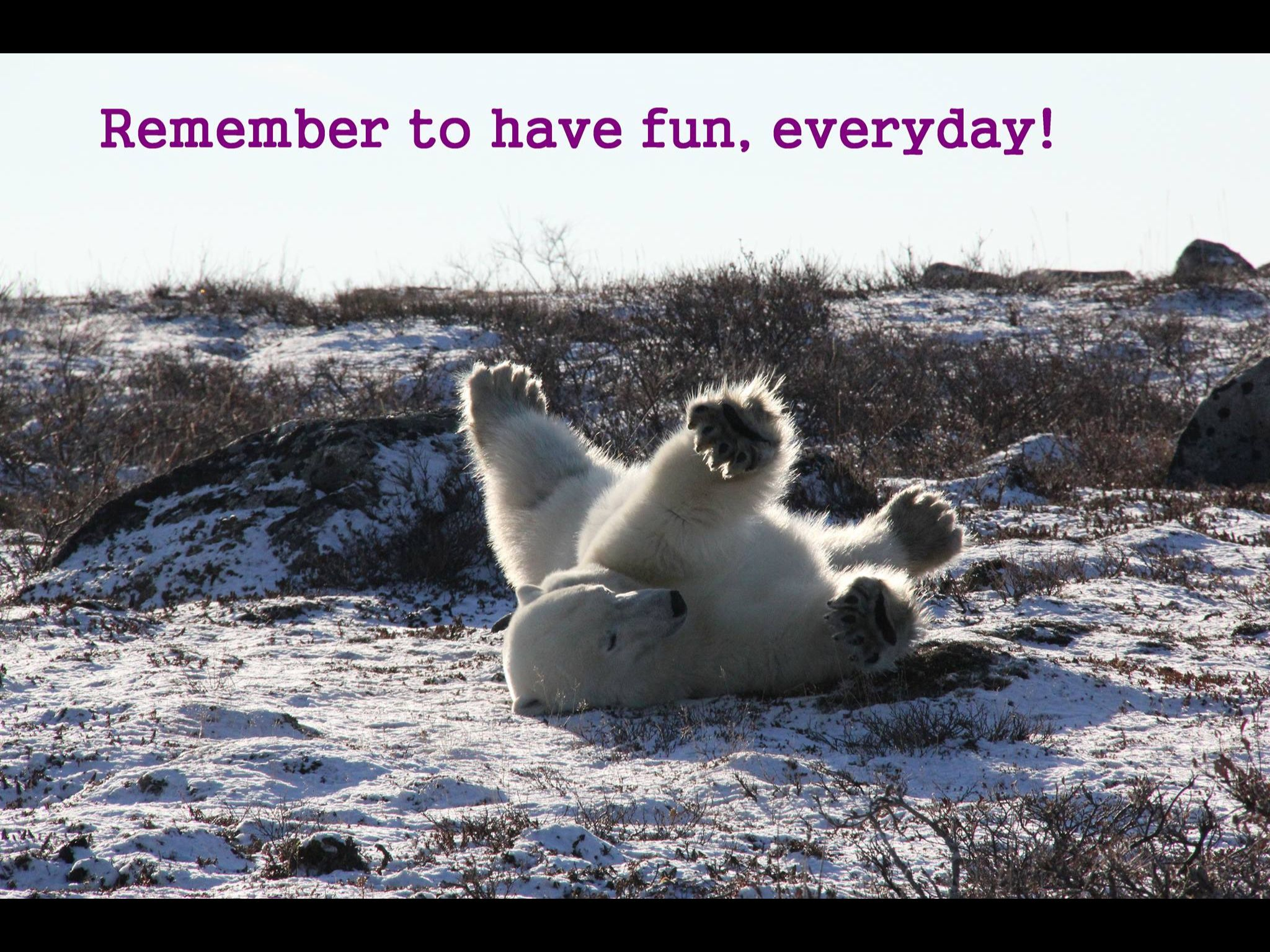 Remember to have fun, everyday!