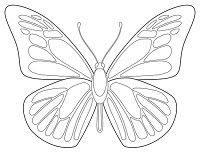 For the study of butterflies, or for symmetrical coloring