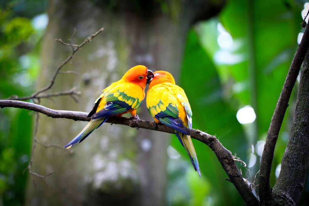 Love Birds Wallpaper In Hd : Love Birds Images Hd Background Wallpaper 20 cakes Pinterest Love birds, Birds and Hd ...