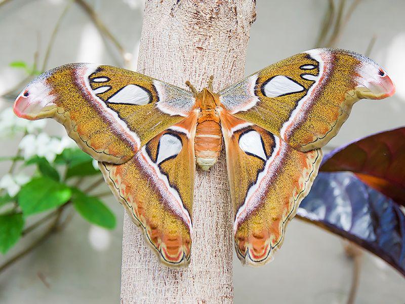Papillons en Liberté - Serres d'exposition du Jardin botanique de Montréal #blog #lifestyle #artdevivre #culture #nature #photographie #animaux #cute #serres #jardin #jardinbotanique #espacepourlavie #montréal #mtl #exposition #papillons #PapillonsEnLiberté #expat #expatlife #québec #canada http://mamzelleboom.com/2015/06/16/serres-d-exposition-du-jardin-botanique-de-montreal-et-exposition-papillons-en-liberte-espace-pour-la-vie/