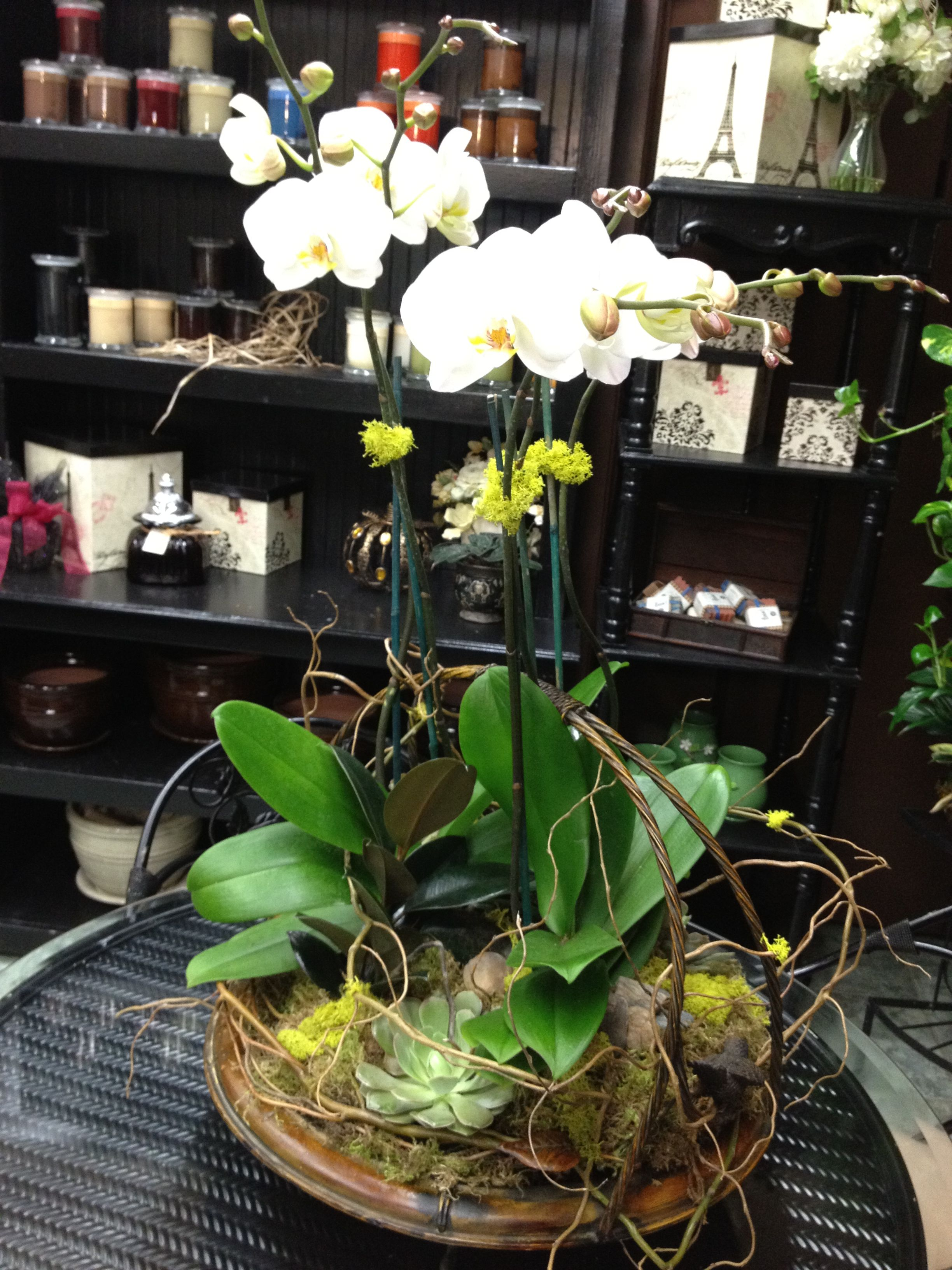 Phalenopsis Orchids and Succulents at PPF