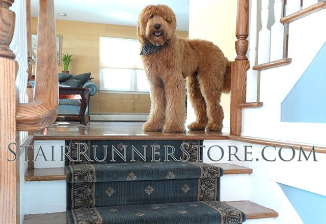 Specializing In Hall And Stair Runner Carpet, Most Comprehensive Selection  Of Runner Products. Standard Staircase, Custom Stair Runners Or Hall Runner  ...