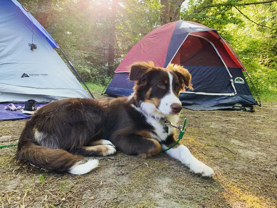 Aussie Camping #camping #hiking #outdoors #tent #outdoor # ...