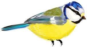 Birds png - ค้นหาด้วย Google