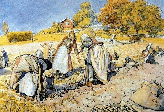 Carl Larsson Potato Harvest.
