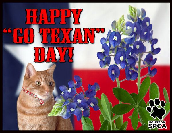 Happy Go Texan Day From The Houston Spca Why Not Celebrate By