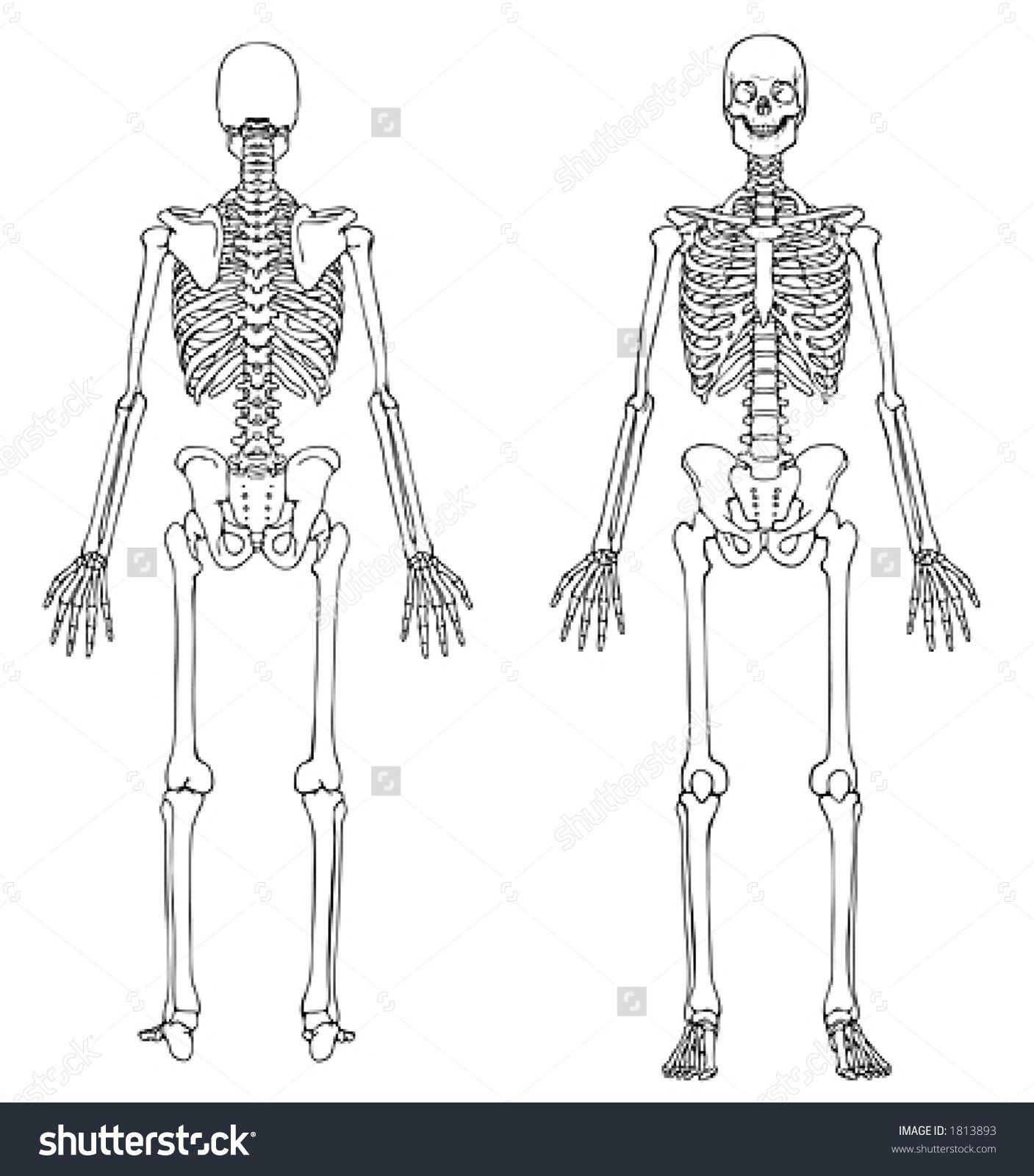 Pin De Allison Lance En Md Human Body