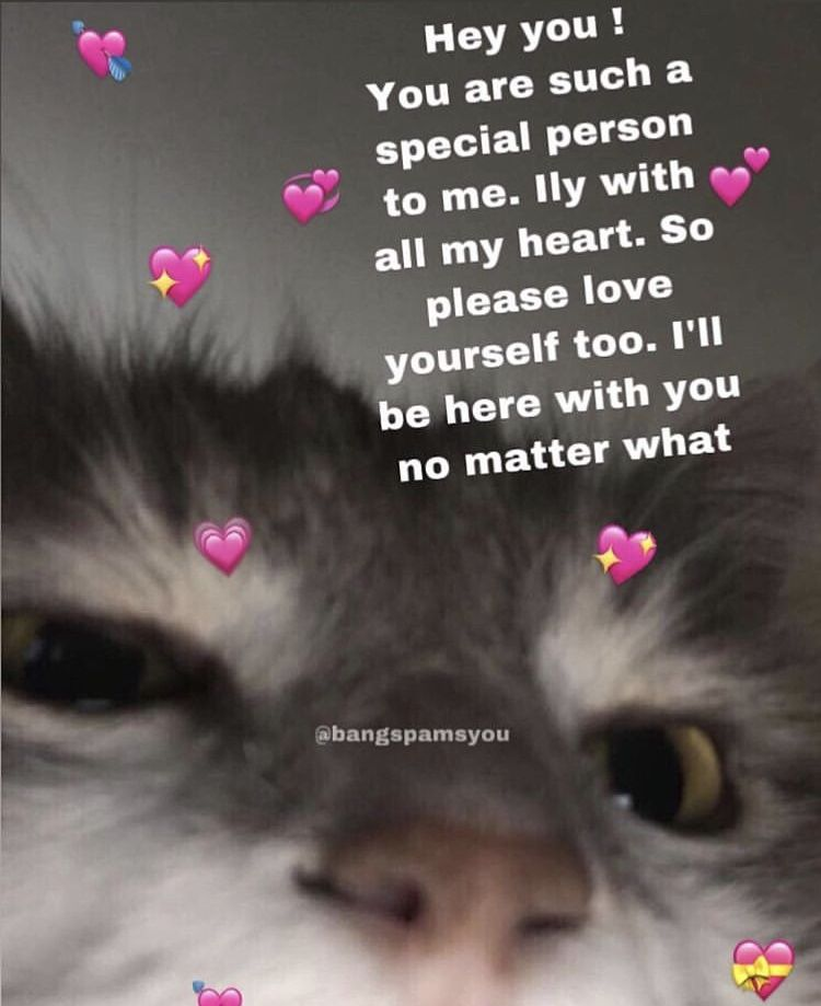 Pin By Alyssa On Love Memes Love Memes Wholesome Memes Cute Texts