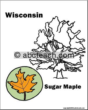 Wisconsin State Tree