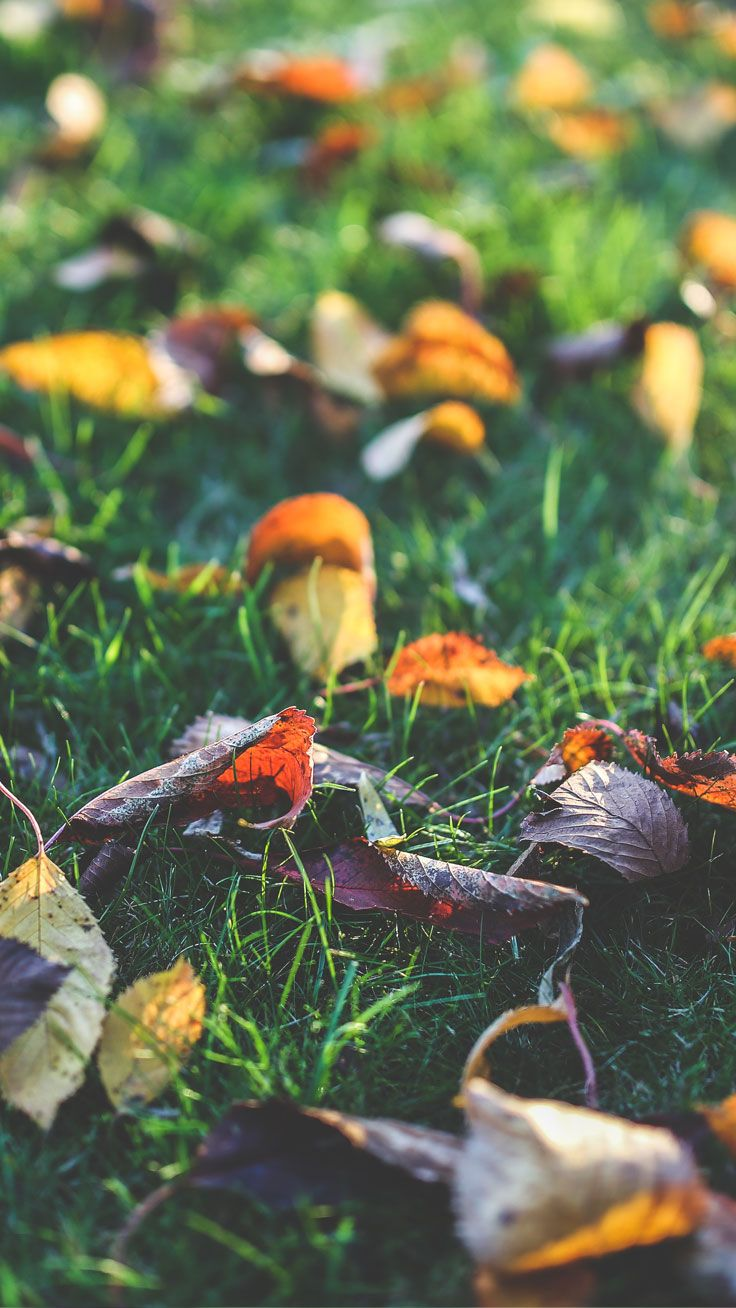 8 Free Autumn Inspired Iphone 7 Plus Wallpapers Nature Iphone