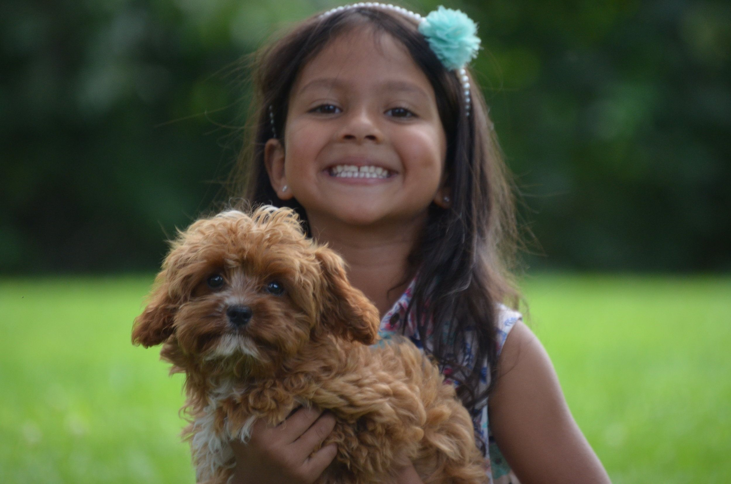 Toward The Final Cavapoo Adoption Fee And Can Be Refunded Any Time