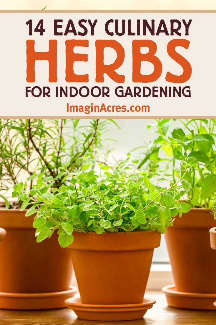 Photo of 14 Culinary Herbs for Your Indoor Herb Garden