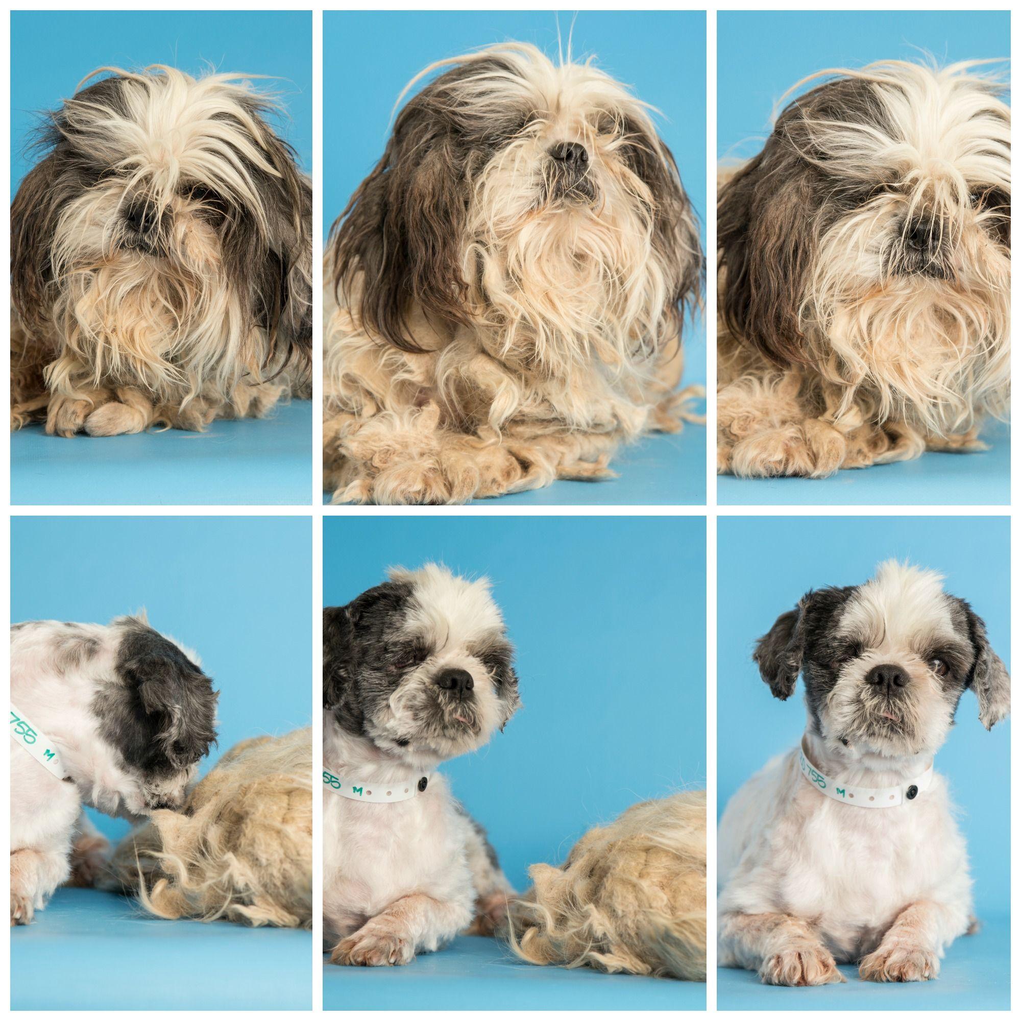 Transformation Tuesday Todd Arizona Humane Society Humane Society Shelter Dogs Amazing Transformations