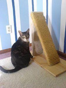DIY Cat Scratching post