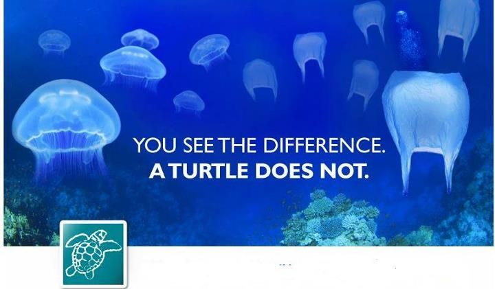 """Plastic bags: """"You see the difference. A turtle doesn't"""""""