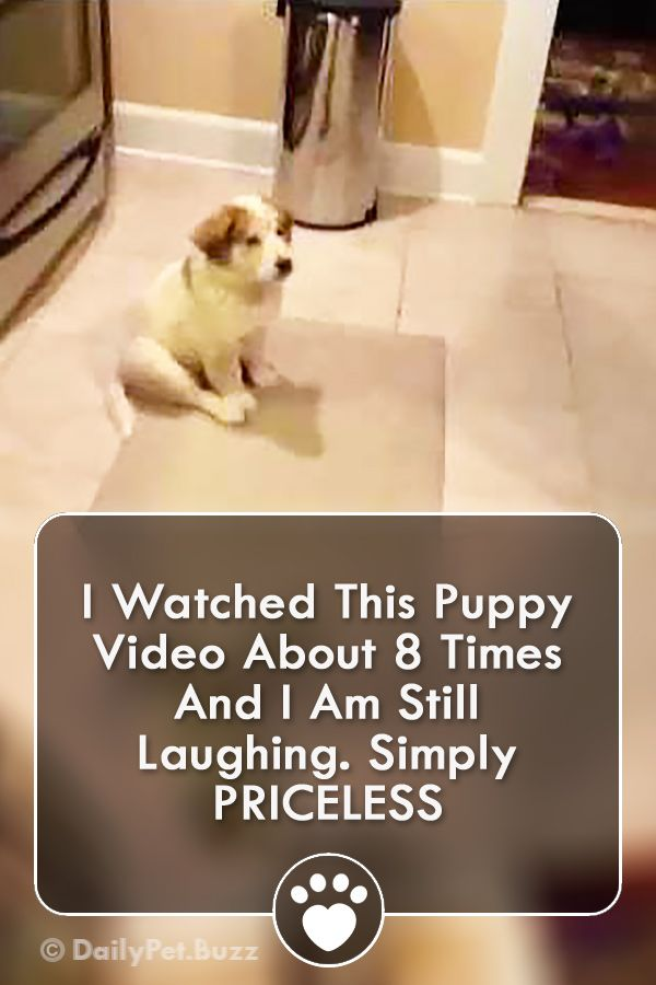 I Watched This Puppy Video About 8 Times And I Am Still Laughing. Simply PRICELESS #animals #animalvideos #cute #dogs #dogvideos #funny #pets #puppies #puppyvideos #video via @dailypetbuzz