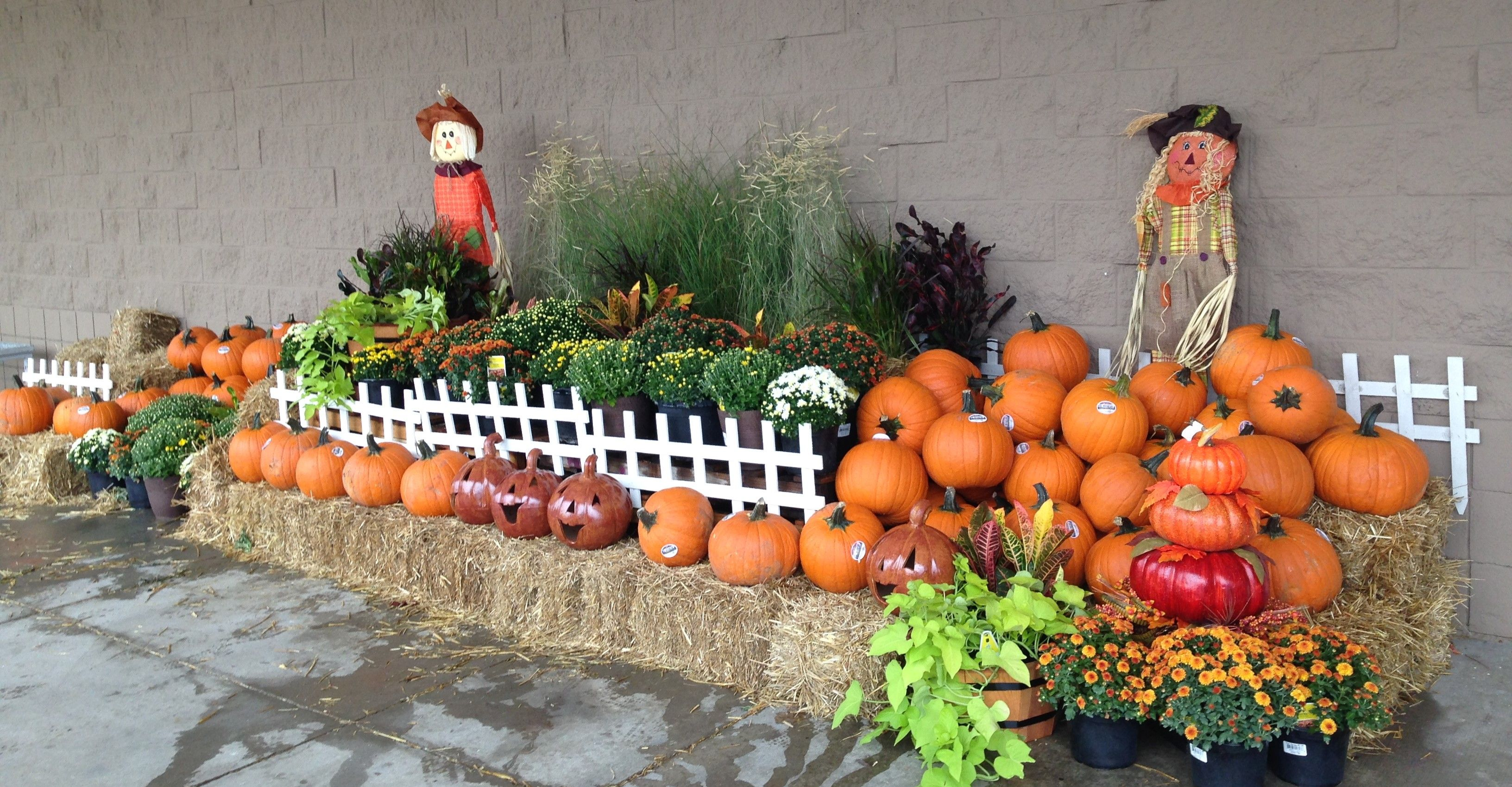 Fall Display In Arlington Tx Lowes With Images Garden Center