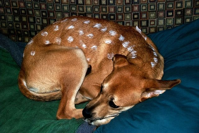 Baby Doe Deer Dog Curled Up Pet Halloween Costumes Dog
