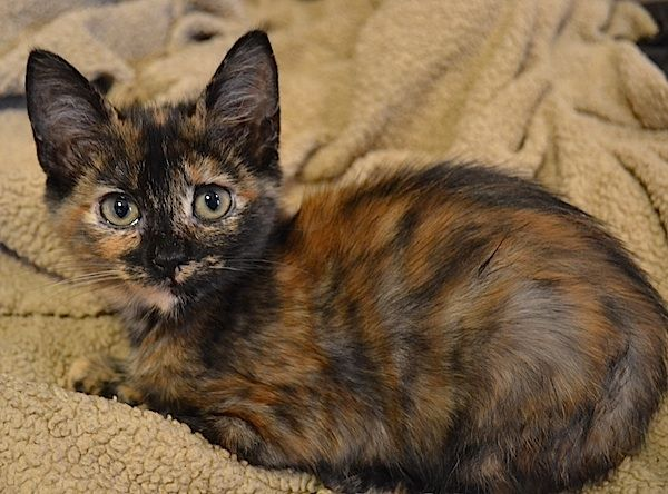 Lyra Was With Us Twice Once To Grow And Then Back Again Due To Ringworm A Common Issue At The Shelter She Is So Sweet Ge Cats Animal Shelter Animals