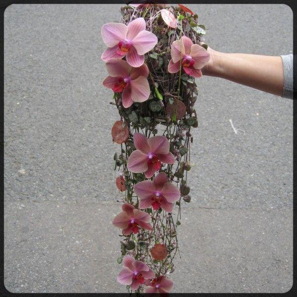 muffe-ceropegia-phaleanopsis-orkideer