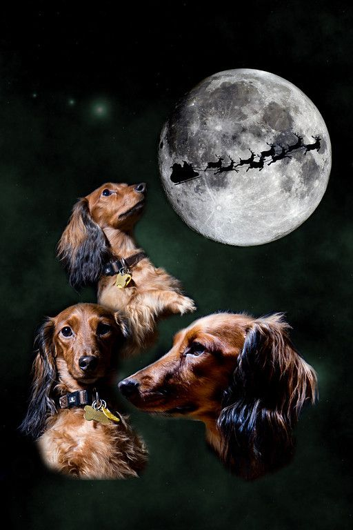 We Wish You A Merry Christmas Mascotas Reno Papa Noel