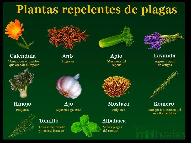 Repelentes de plagas control biologico plantas for Como evitar que salga hierba en el jardin