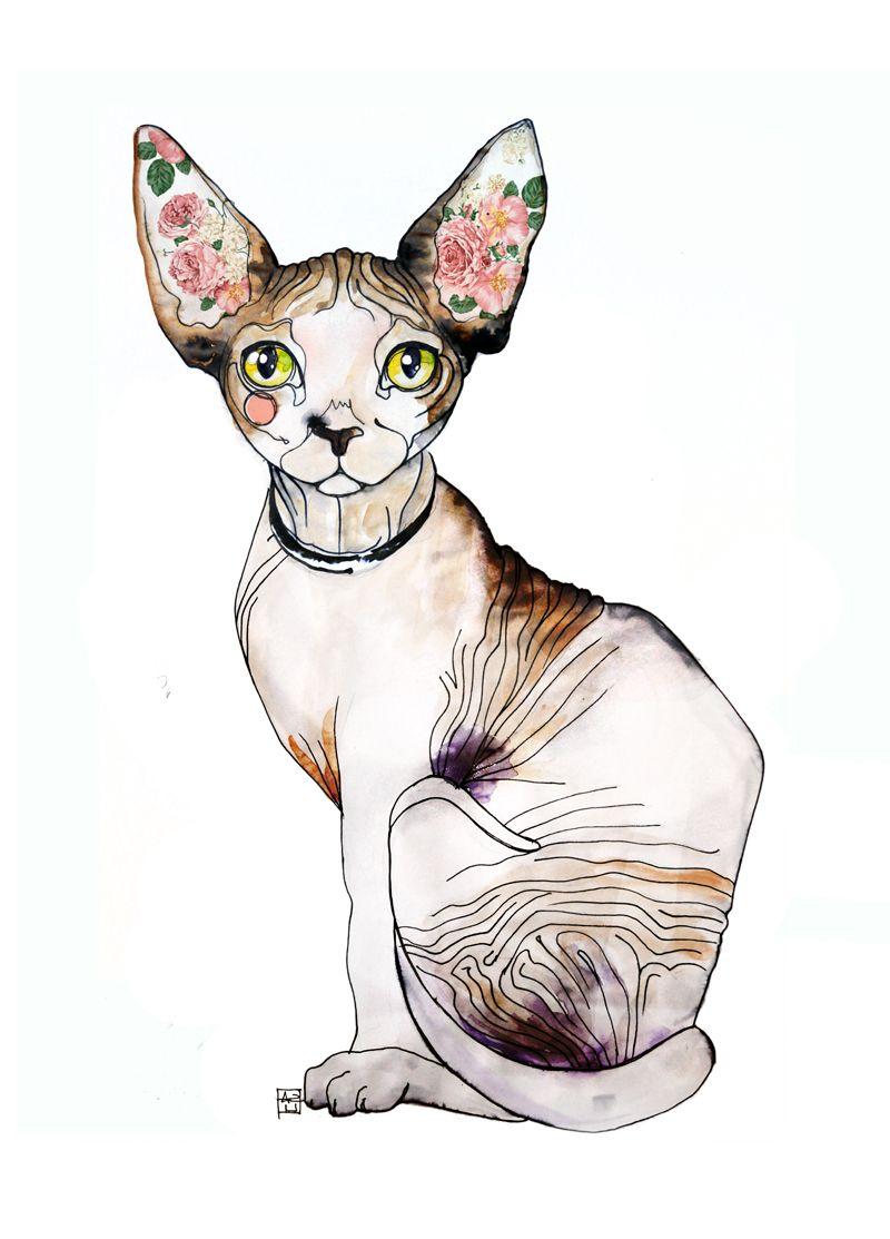 Cat Lovers Card Sphynx Cat Art Card Sphynx Cat Card Sphynx Cat Greetings Card