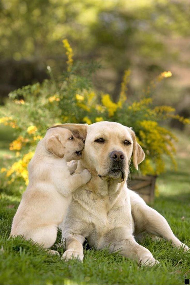 Photo of ^^ Lea más sobre Yorkshire Terrier. Simplemente haga clic aquí para más …