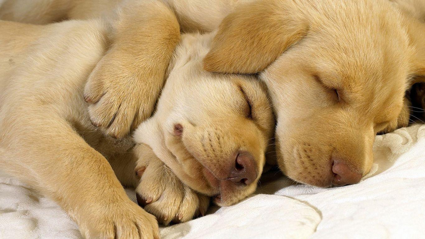 Открытки с собаками спокойной ночи, рамки юбилеем лет