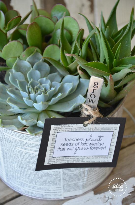 Grow A Succulent Garden Teacher S Gift Gardens