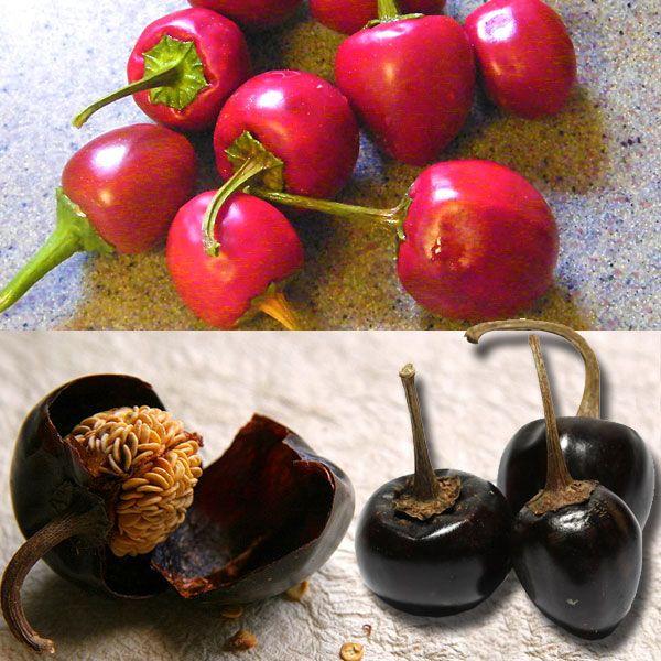 Cascabel Chili Pepper (Bola Chili). 2,500 - 8,000 Scoville ...