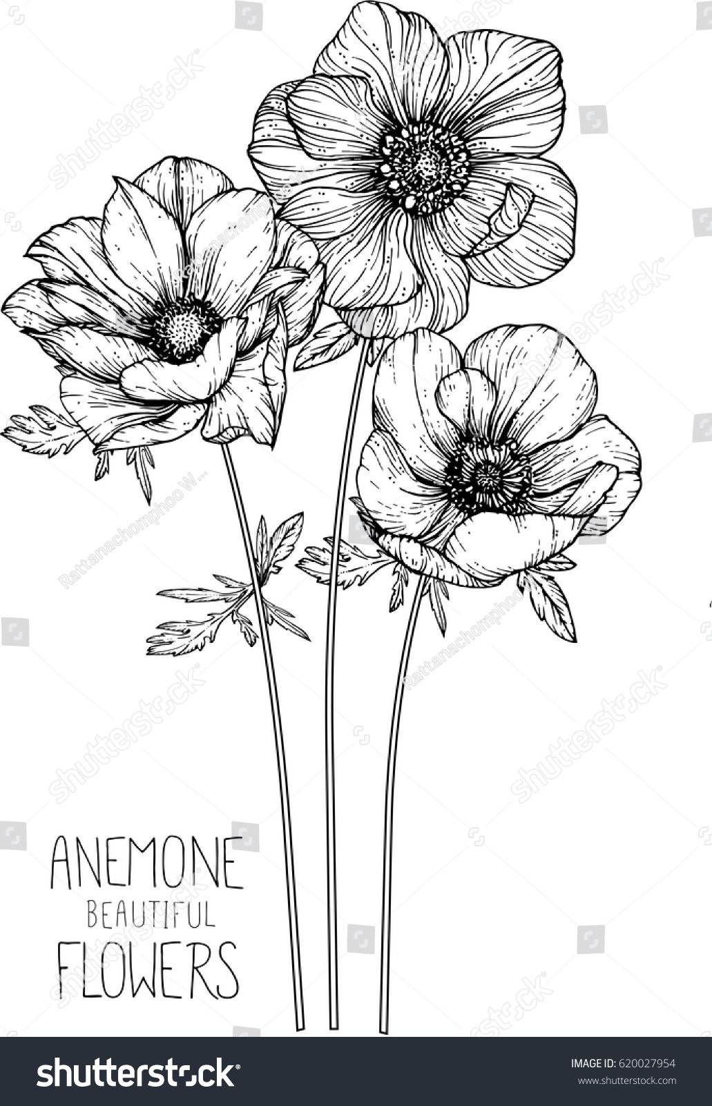 Anemone Flowers Drawing Vector Illustration Line Stock Vector Royalty Free 620027954 In 2020 Flower Line Drawings Flower Drawing Anemone Flower