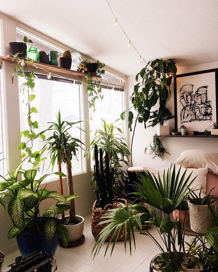 Uohome Instagram Photos And Videos Living Room Plants Bedroom Plants House Plants Decor